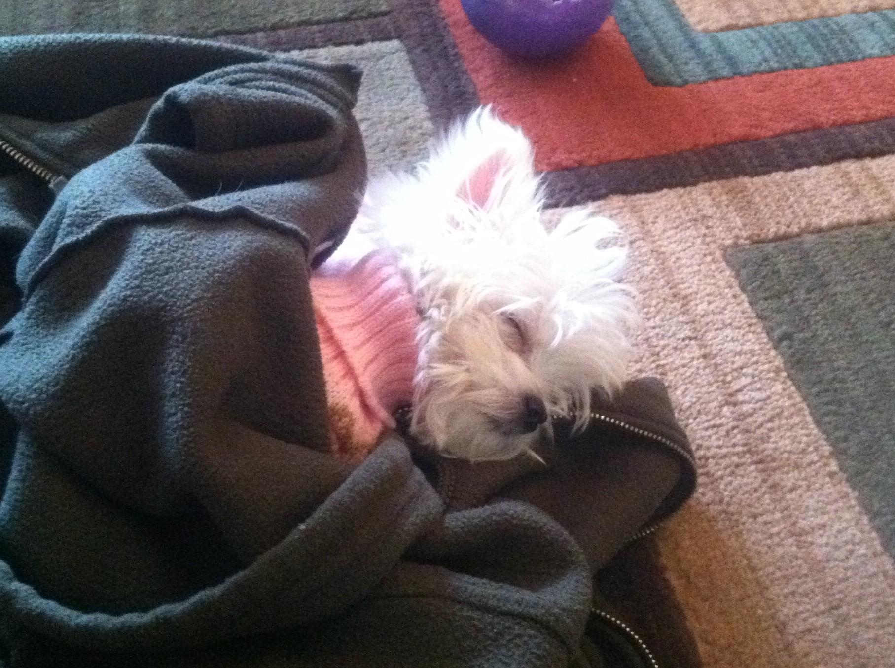 Gidget sleeping (2)